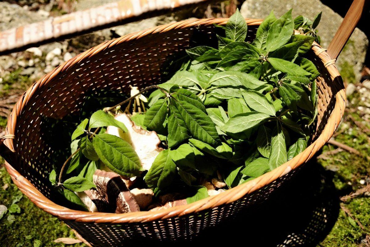 氷見のとある春の日 ~山菜を採りに『めーだん』へ~