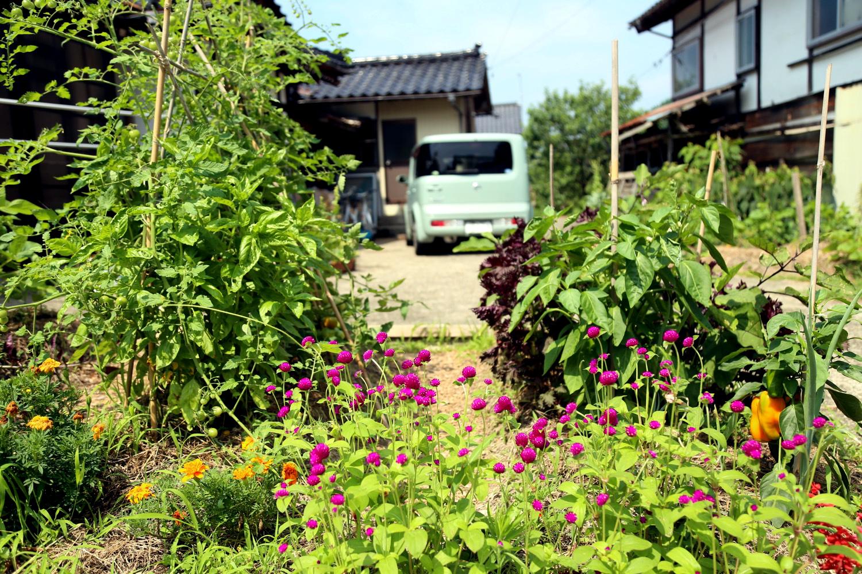 夏野菜の畝